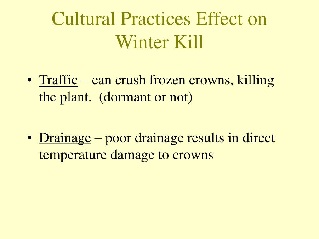 Cultural Practices Effect on Winter Kill