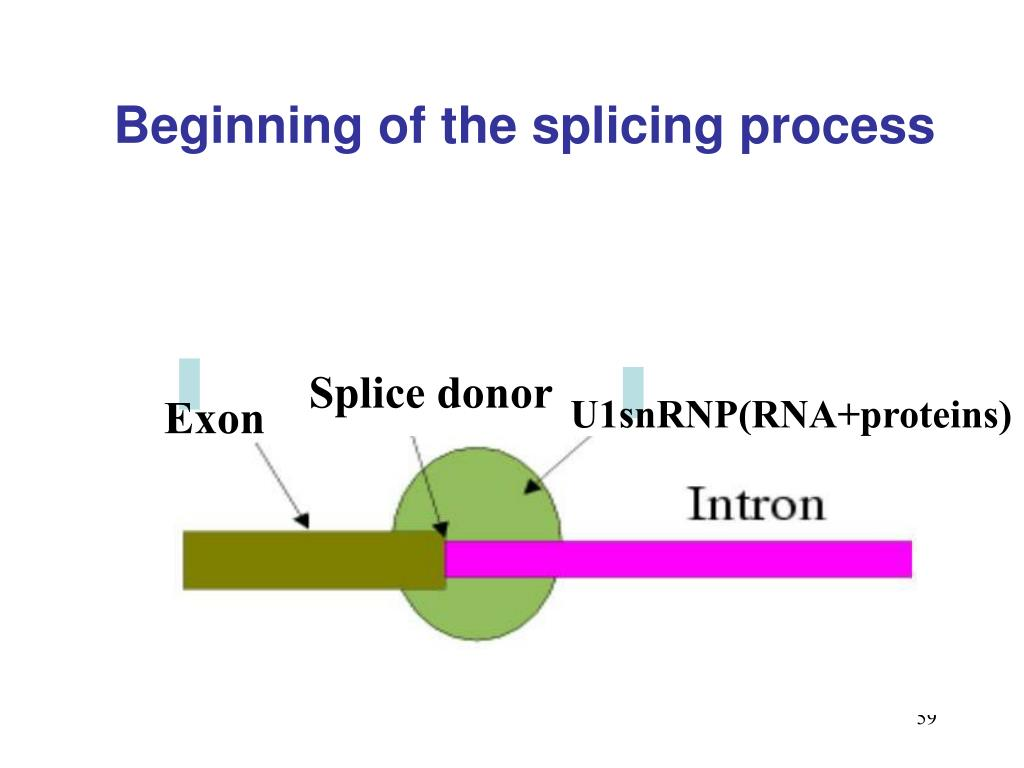 Beginning of the splicing process