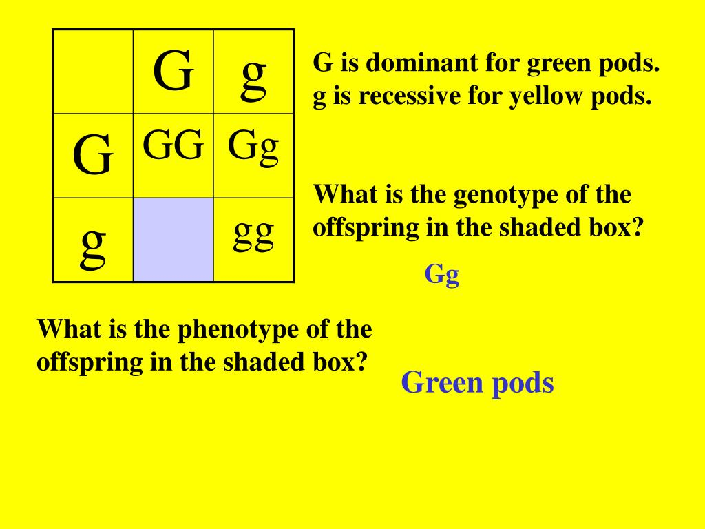 G is dominant for green pods.
