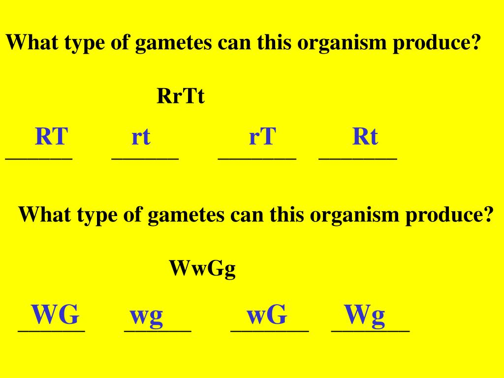 What type of gametes can this organism produce?