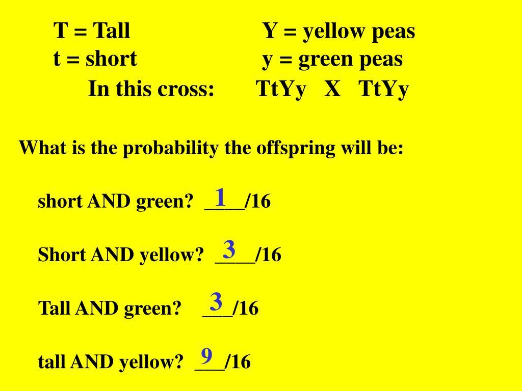 T = TallY = yellow peas