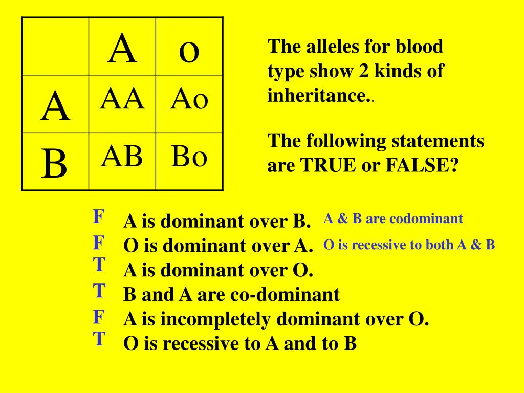 The alleles for blood type show 2 kinds of inheritance.