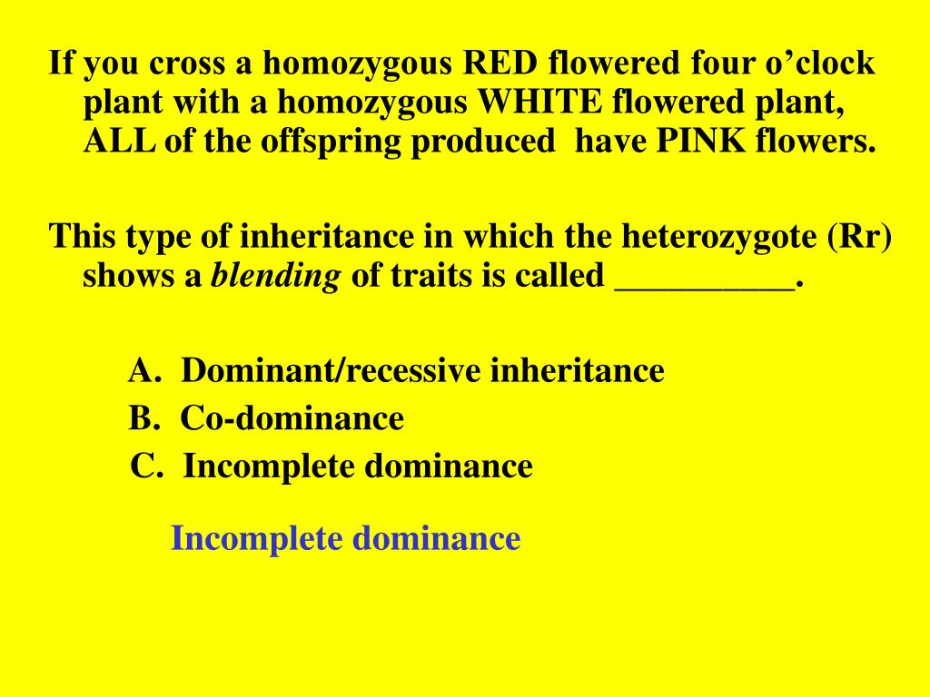 If you cross a homozygous RED flowered four o'clock plant with a homozygous WHITE flowered plant, ALL of the offspring produced  have PINK flowers.