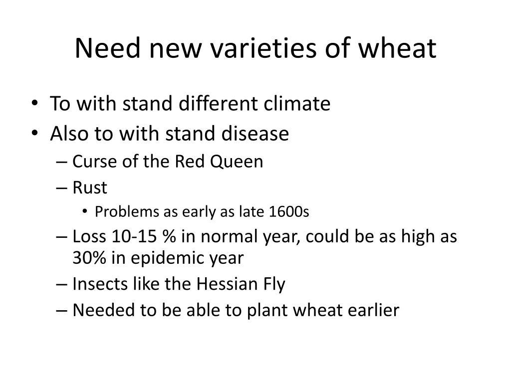 Need new varieties of wheat