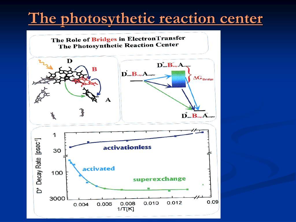 The photosythetic reaction center