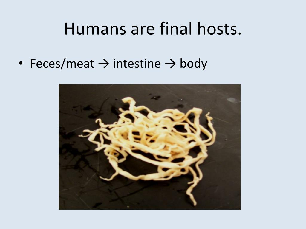 Humans are final hosts.