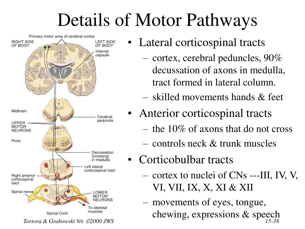 Details of Motor Pathways