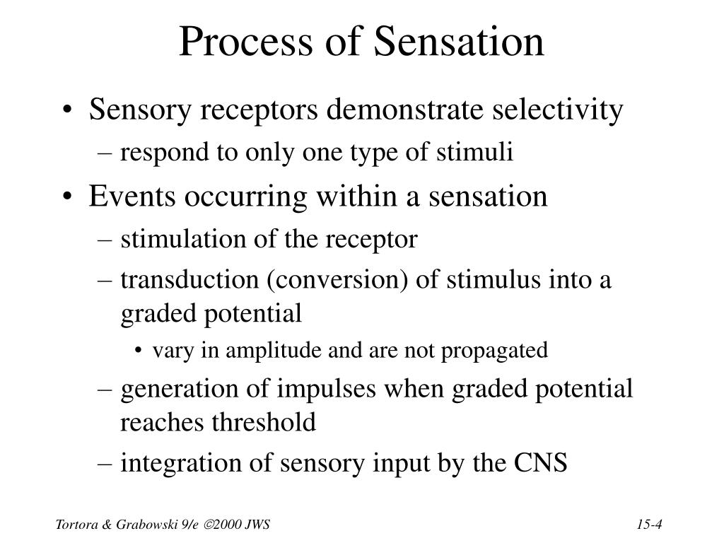 Process of Sensation