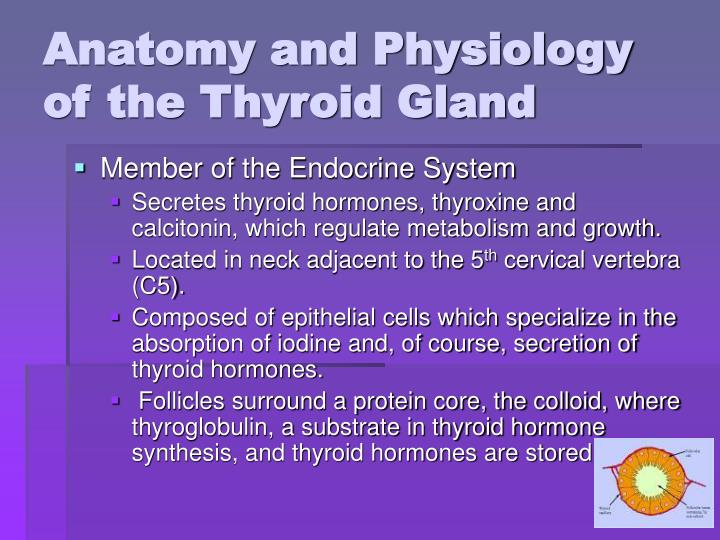 ppt - thyroid and anti-thyroid drugs powerpoint presentation - id, Powerpoint templates