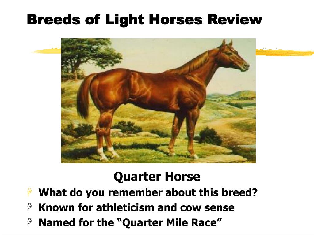 Breeds of Light Horses Review