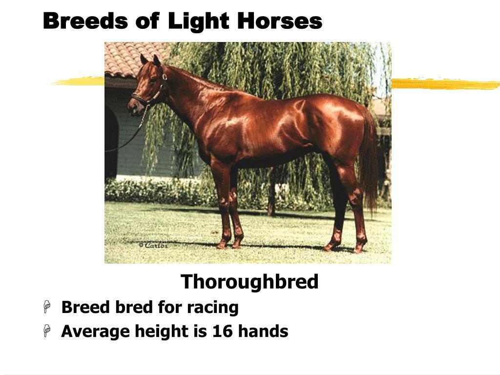 Breeds of Light Horses