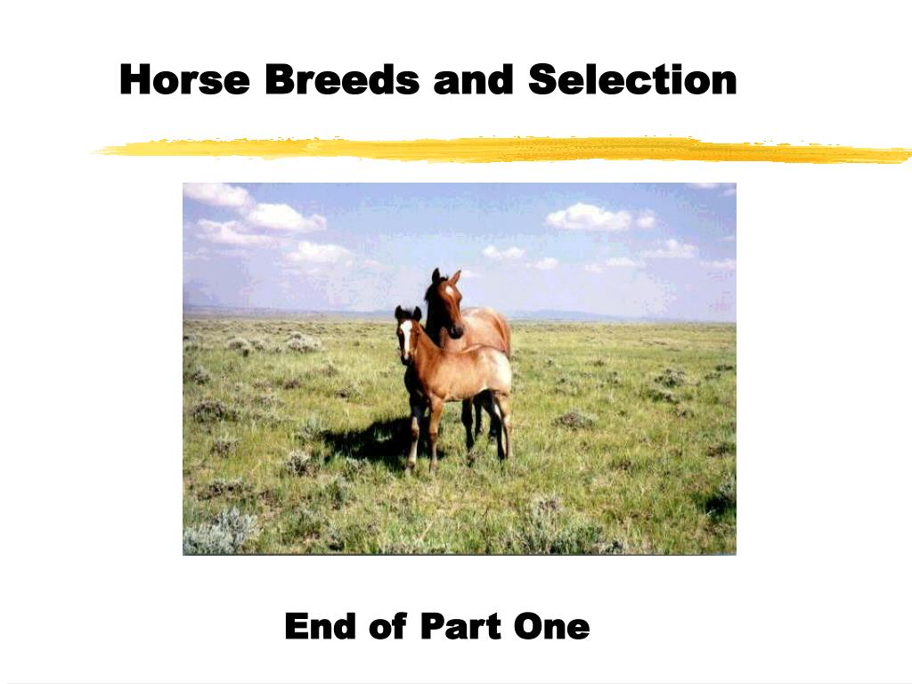 Horse Breeds and Selection
