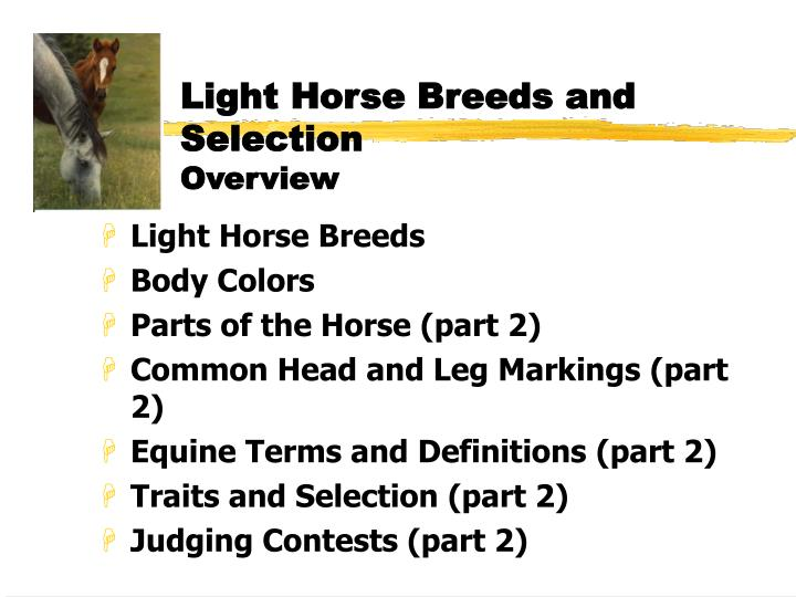 Light horse breeds and selection overview