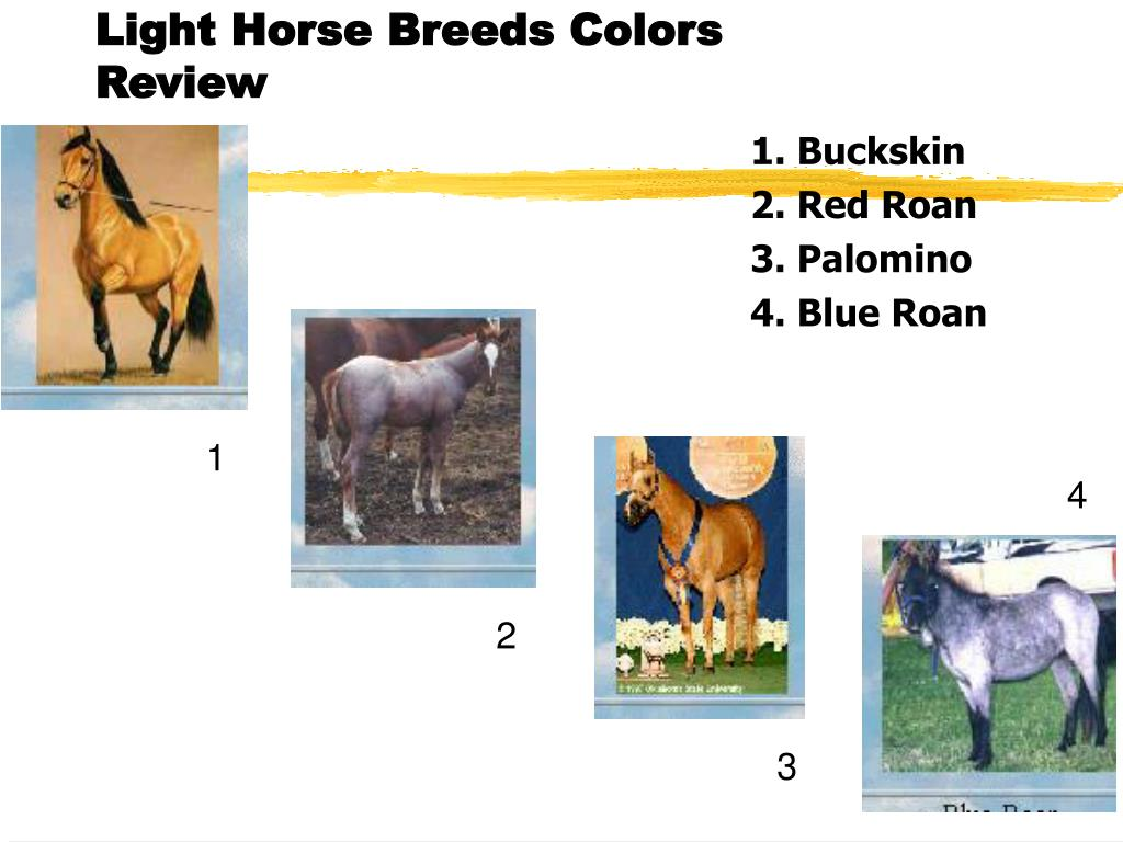 Light Horse Breeds Colors