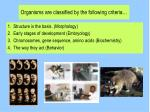 organisms are classified by the following criteria