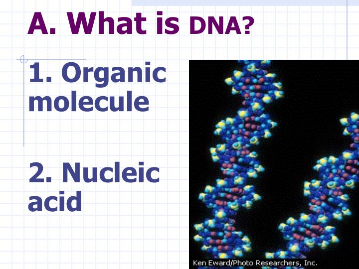 Ppt dna deoxyribonucleic acid the blueprint of life powerpoint a what is dna malvernweather Images