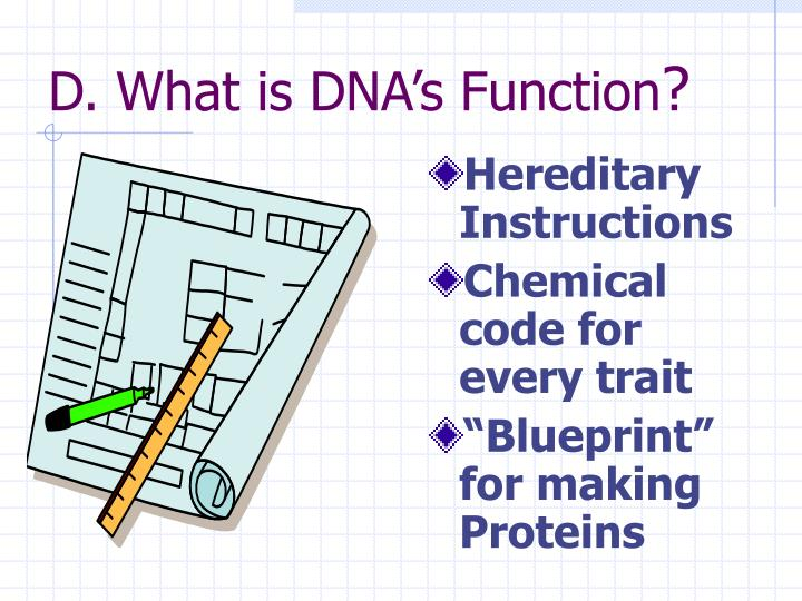 Ppt dna deoxyribonucleic acid the blueprint of life powerpoint d what is dnas function malvernweather Images