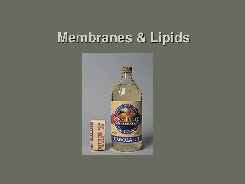 membranes lipids l.