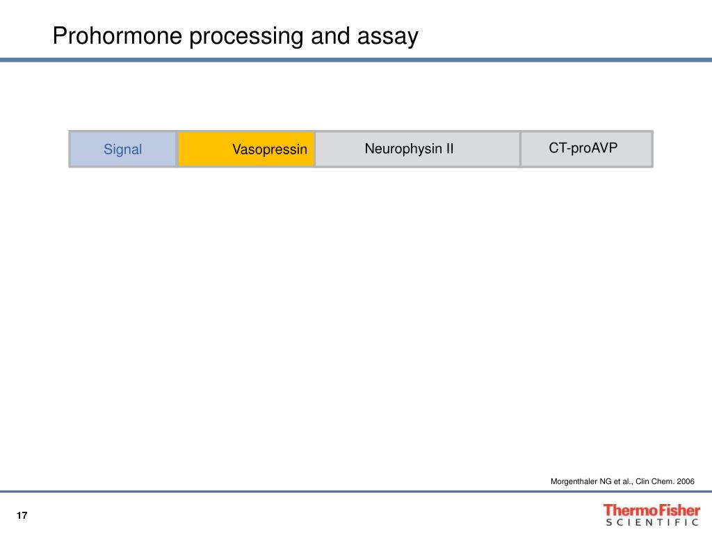 Prohormone processing and assay