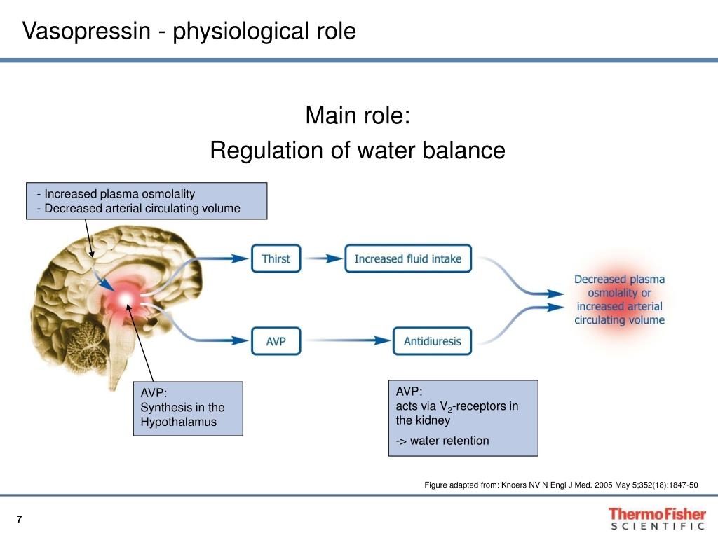 Vasopressin - physiological role