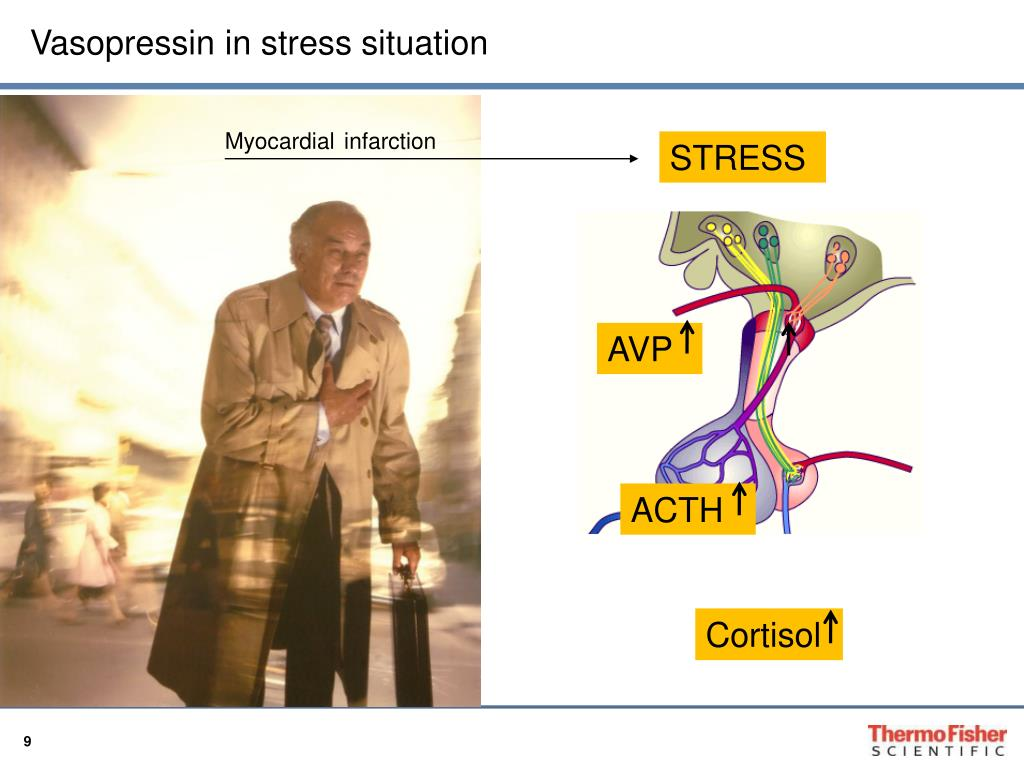 Vasopressin in stress situation