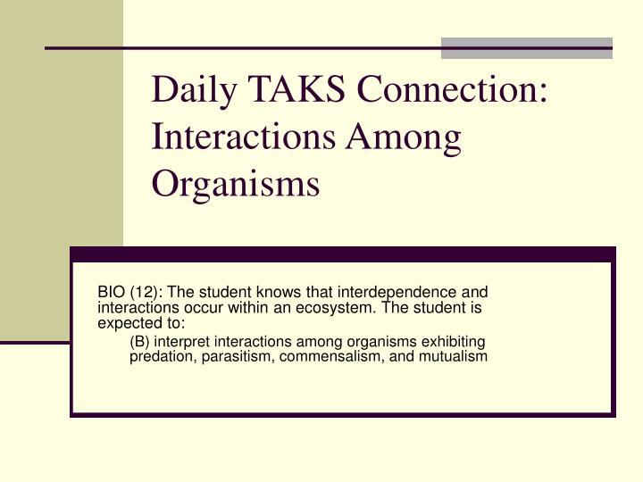 Daily taks connection interactions among organisms
