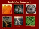 fractals are everywhere