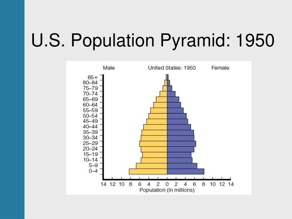 U.S. Population Pyramid: 1950