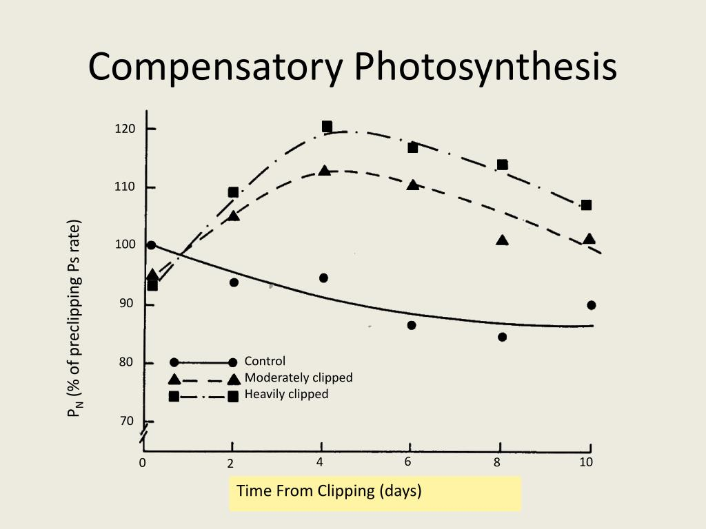 Compensatory Photosynthesis