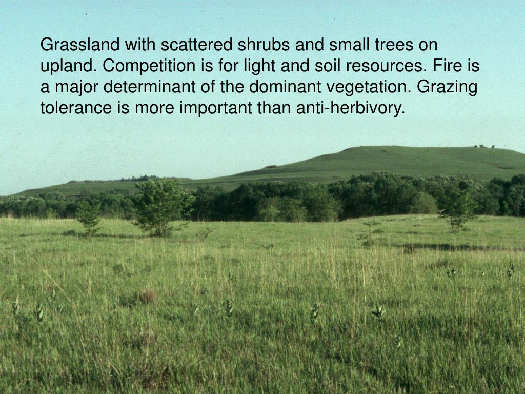 Grassland with scattered shrubs and small trees on upland. Competition is for light and soil resources. Fire is a major determinant of the dominant vegetation. Grazing tolerance is more important than anti-herbivory.