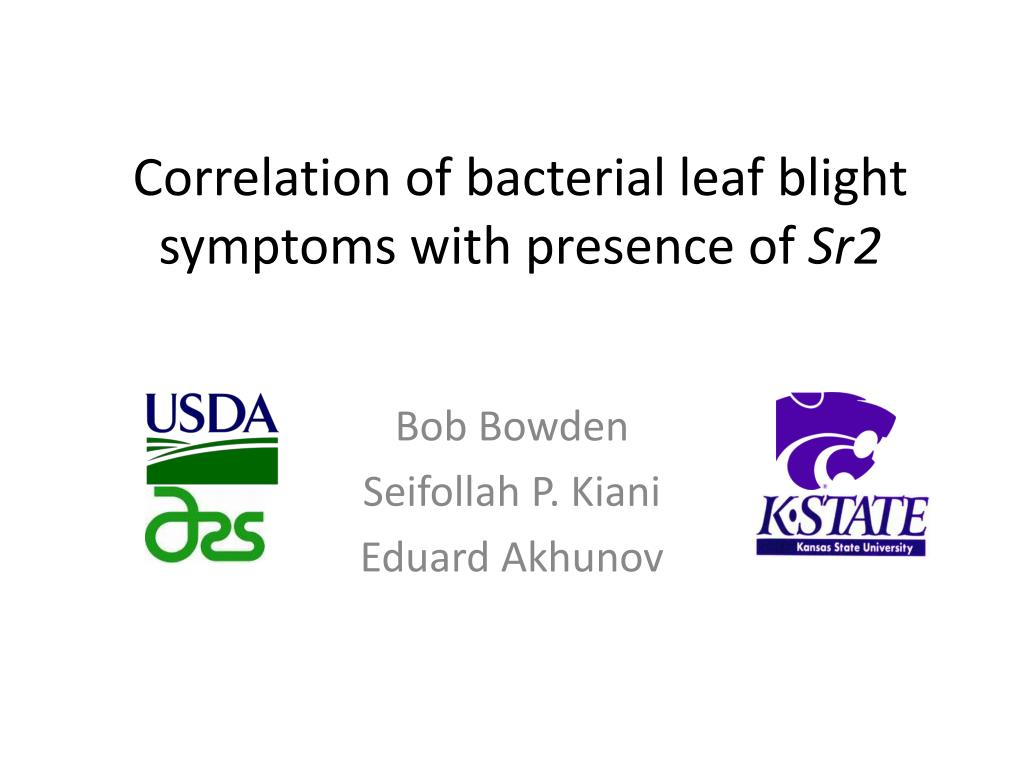 correlation of bacterial leaf blight symptoms with presence of sr2 l.