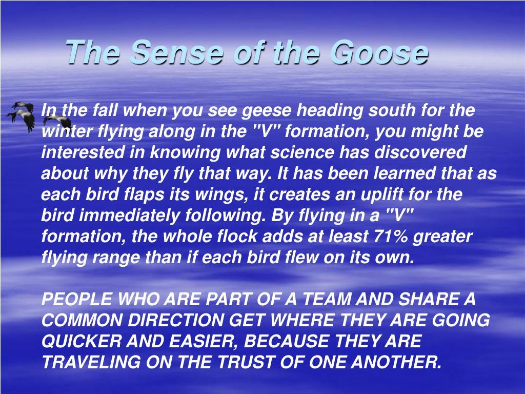 The Sense of the Goose