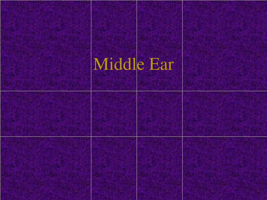 PPT - Middle Ear PowerPoint Presentation - ID:546996