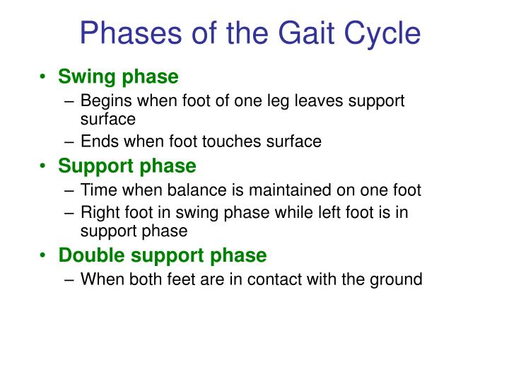 Phases of the Gait Cycle