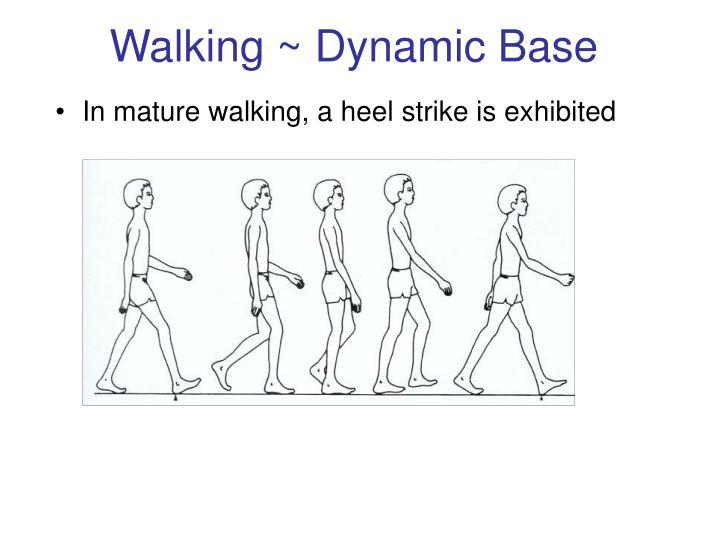 Walking ~ Dynamic Base