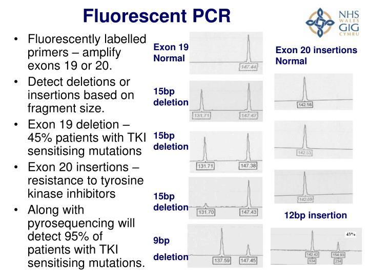 Fluorescent PCR