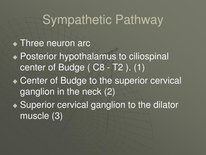 Sympathetic Pathway