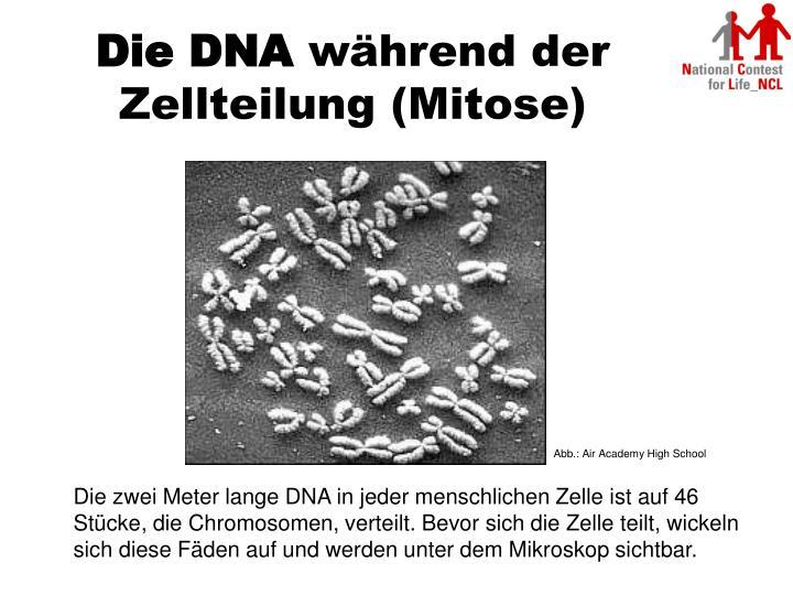 Die DNA