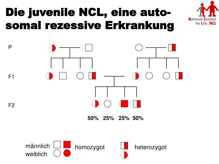 Die juvenile NCL, eine auto-somal rezessive Erkrankung