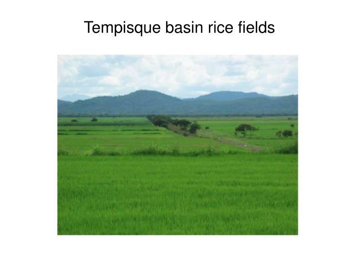 Tempisque basin rice fields