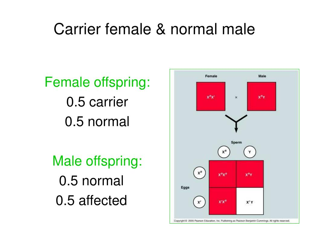 Carrier female & normal male