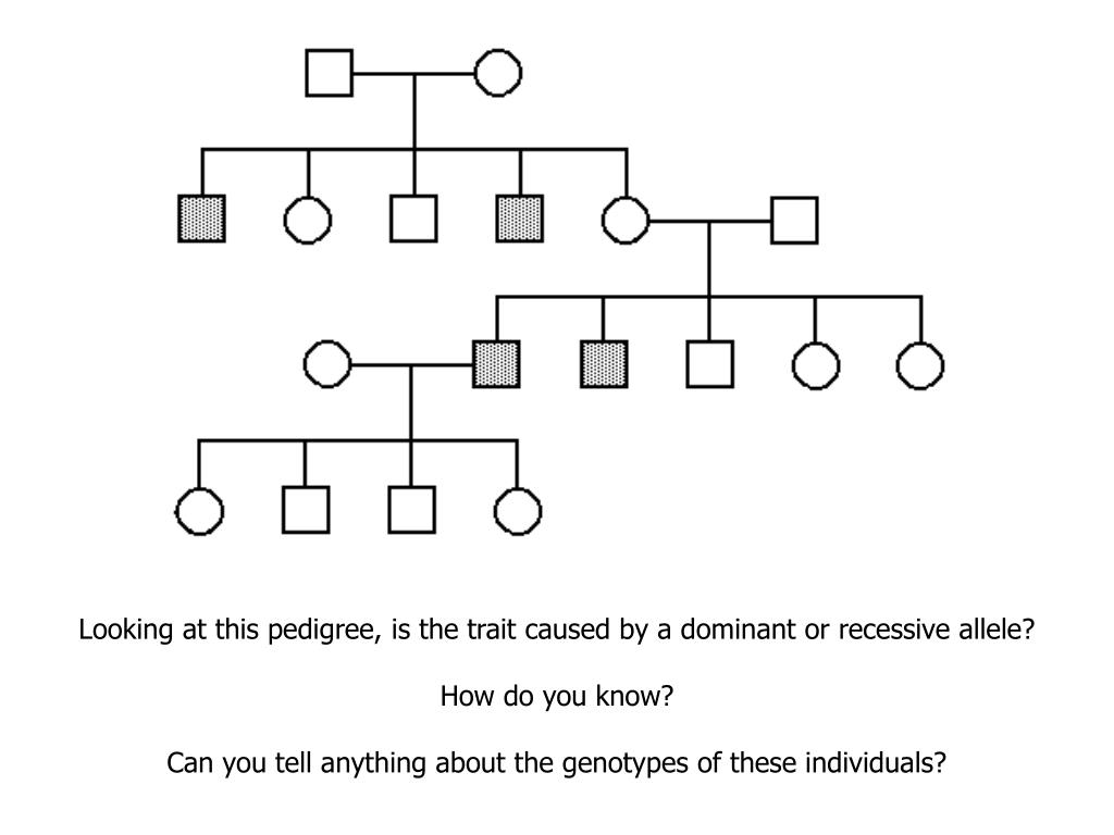 Looking at this pedigree, is the trait caused by a dominant or recessive allele?