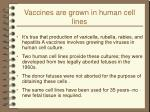 vaccines are grown in human cell lines
