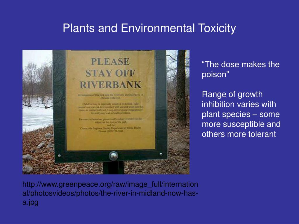 plants and environmental toxicity l.