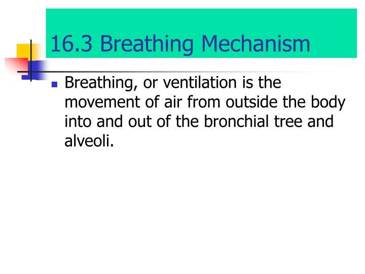 16.3 Breathing Mechanism