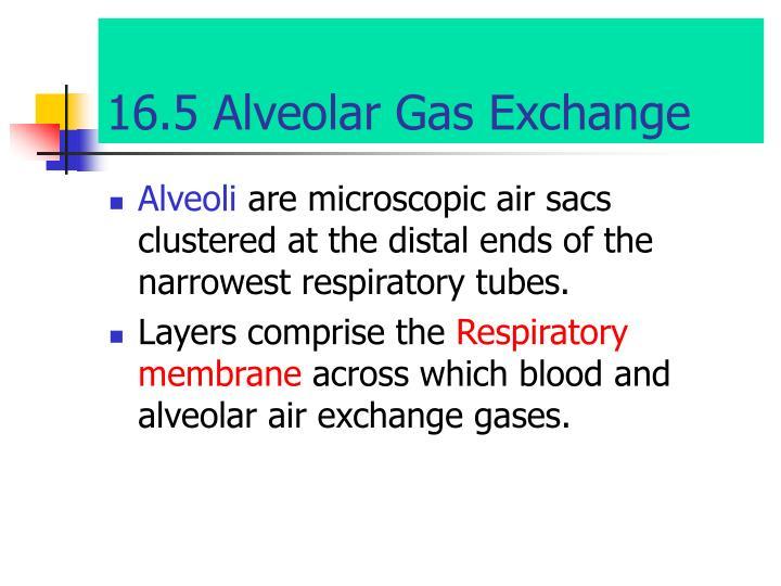 16.5 Alveolar Gas Exchange