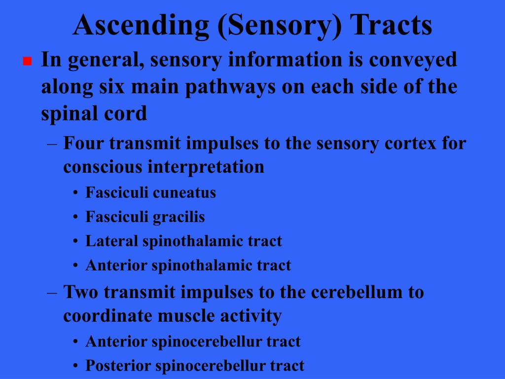 Ascending (Sensory) Tracts