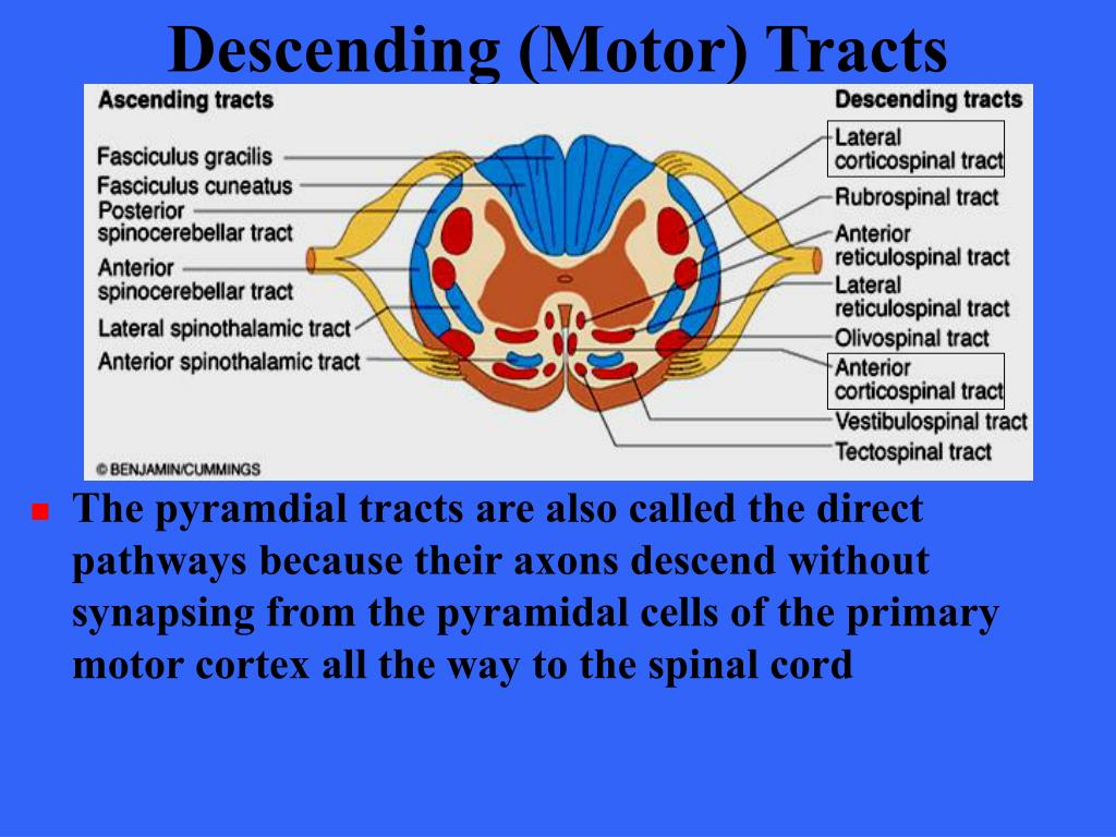 Descending (Motor) Tracts