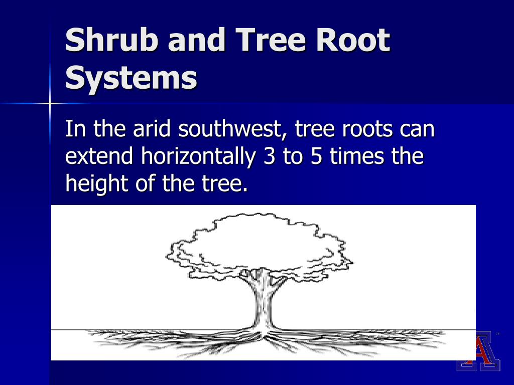 Shrub and Tree Root Systems