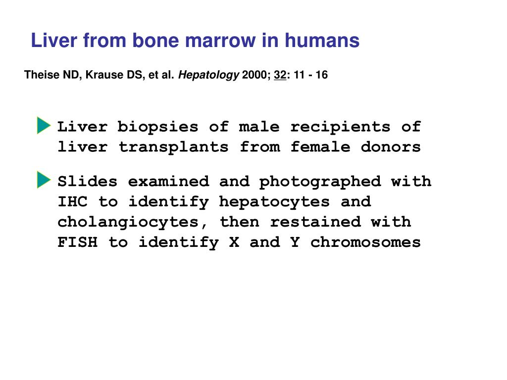 Liver from bone marrow in humans
